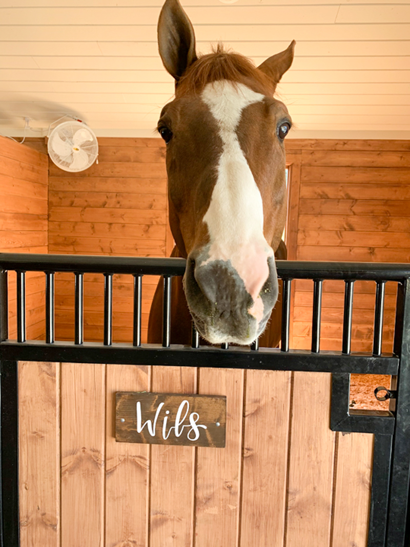 Wils in his stall